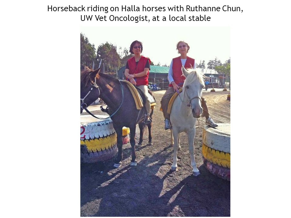 Horseback riding on Halla horses with Ruthanne Chun, UW Vet Oncologist, at a local stable