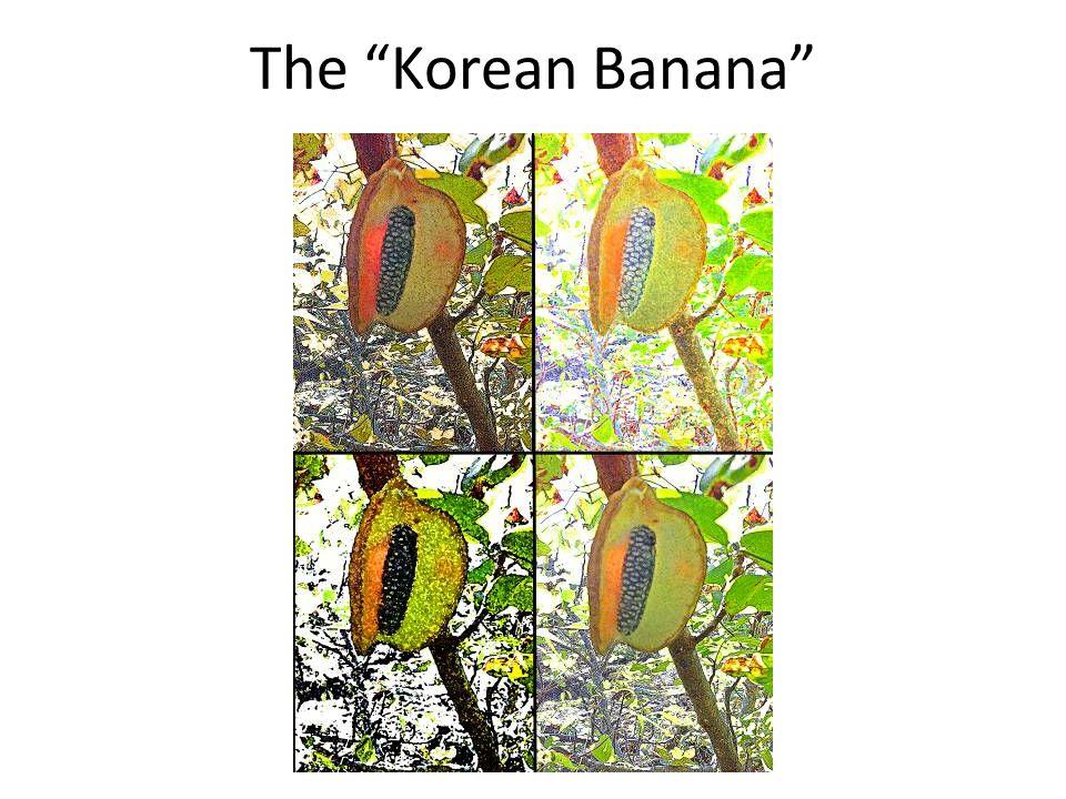 "The ""Korean Banana"""