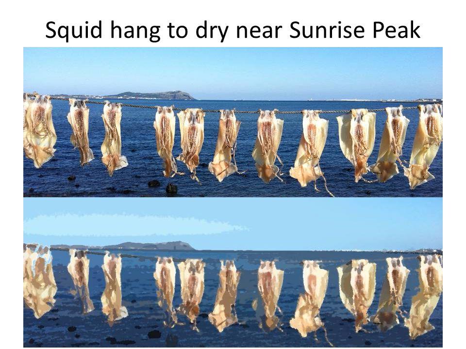 Squid hang to dry near Sunrise Peak