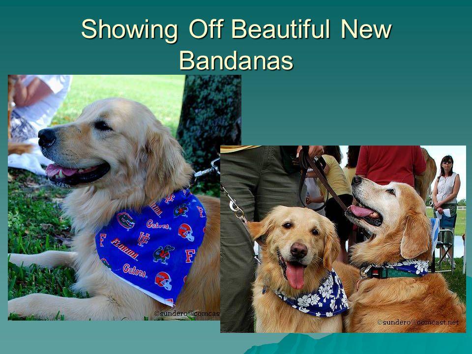 Showing Off Beautiful New Bandanas