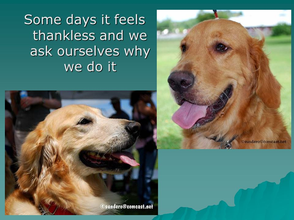 Some days it feels thankless and we ask ourselves why we do it