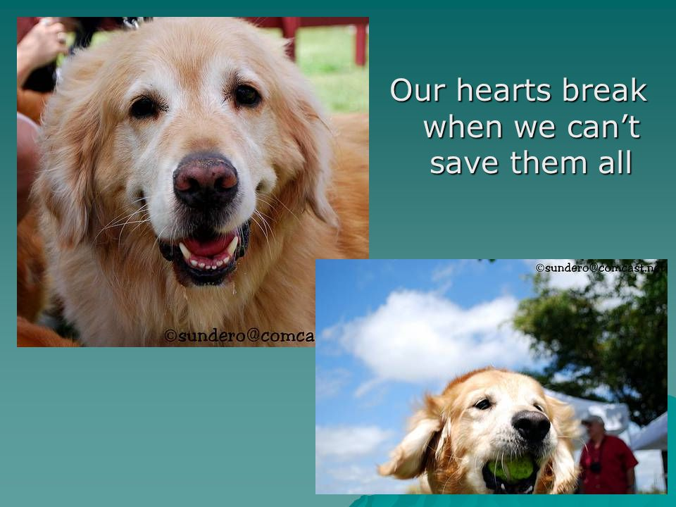 Our hearts break when we can't save them all