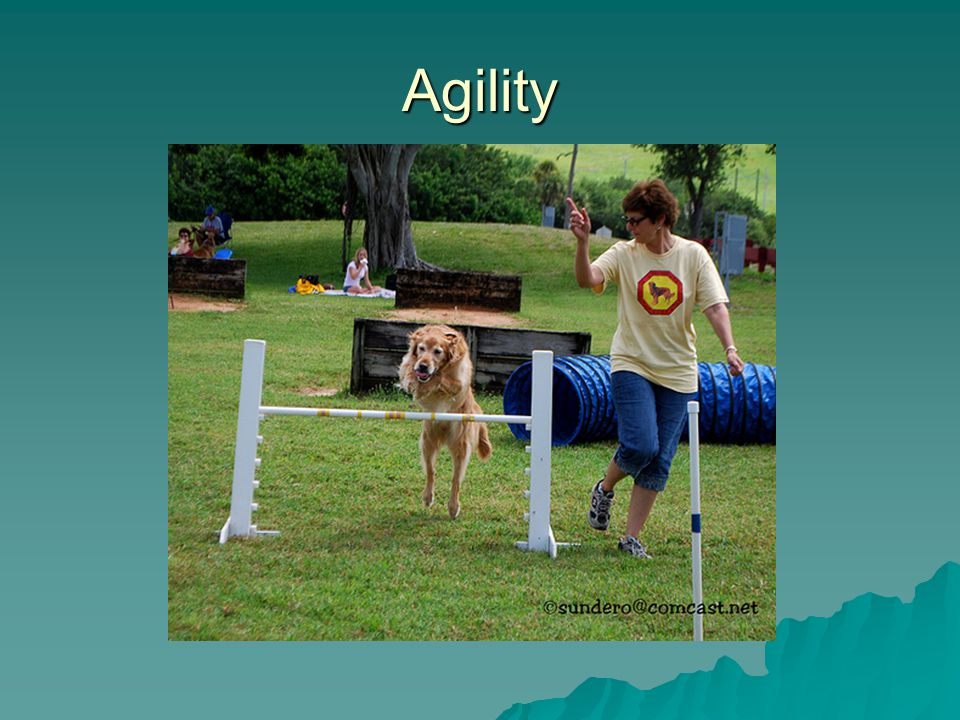 Demos on agility, obedience and field work