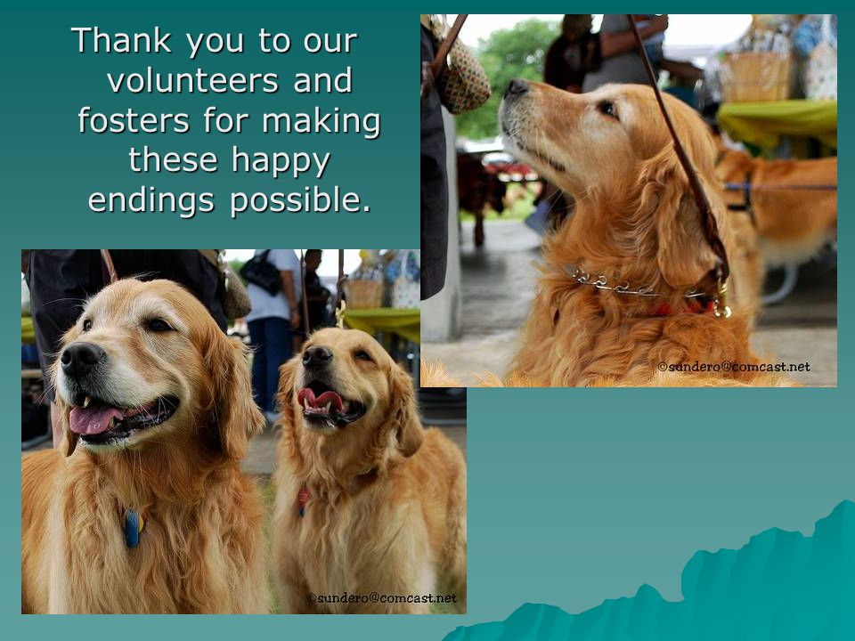 Thank you to our volunteers and fosters for making these happy endings possible.