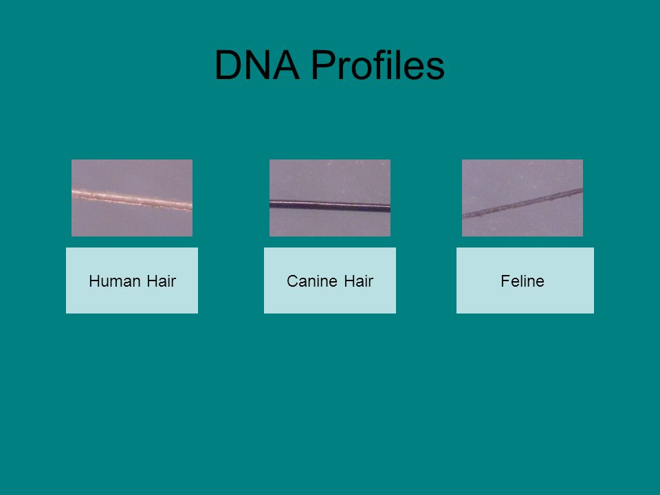 DNA Profiles Human HairFelineCanine Hair