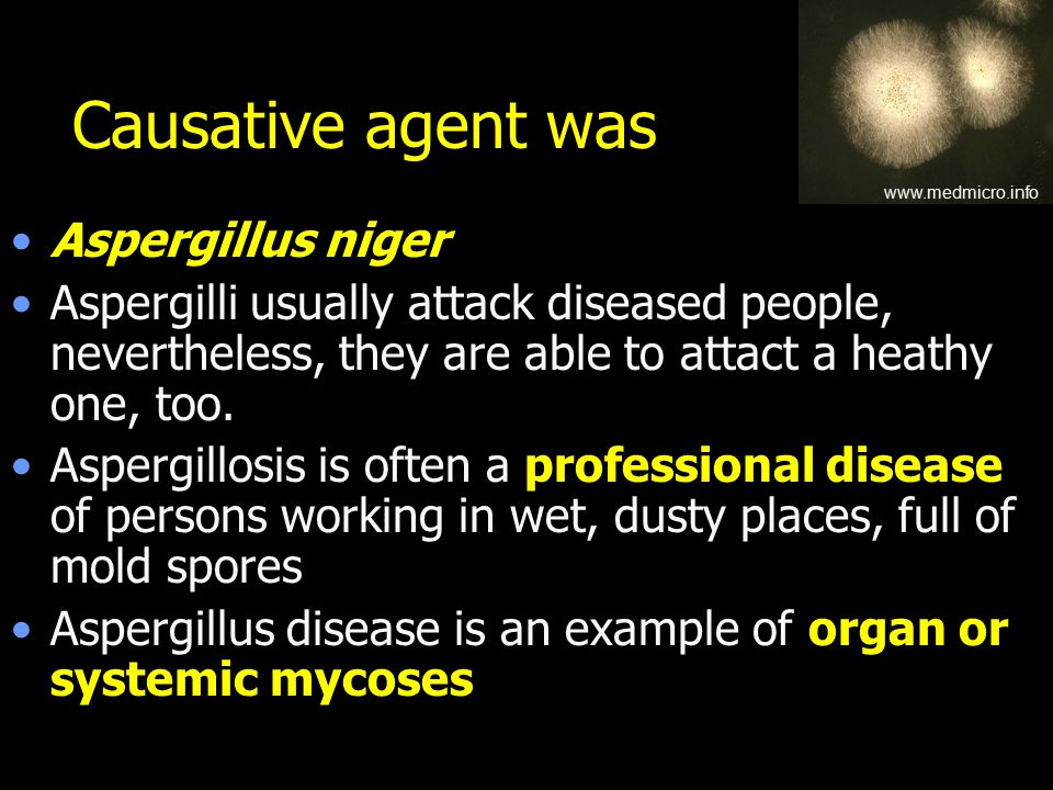 Causative agent was Aspergillus niger Aspergilli usually attack diseased people, nevertheless, they are able to attact a heathy one, too.