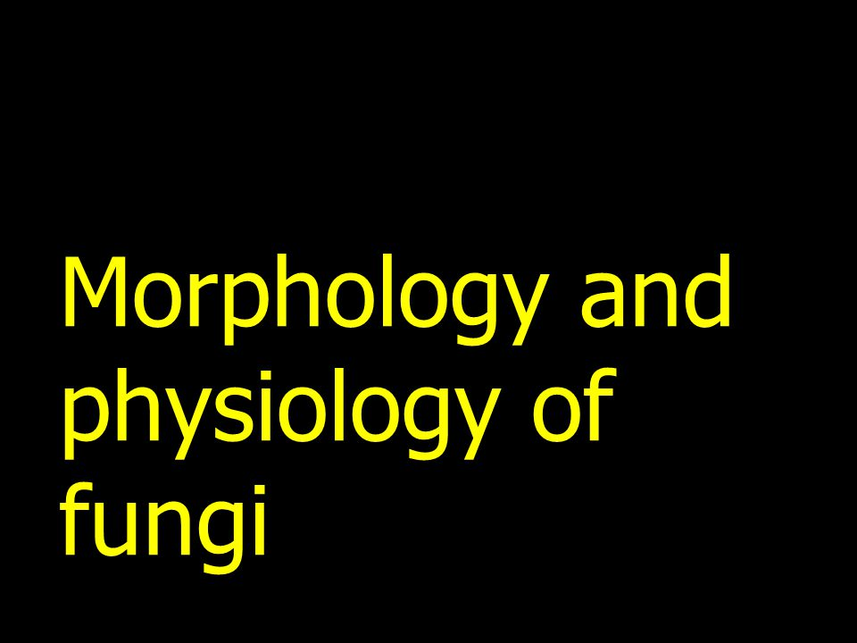 Morphology and physiology of fungi