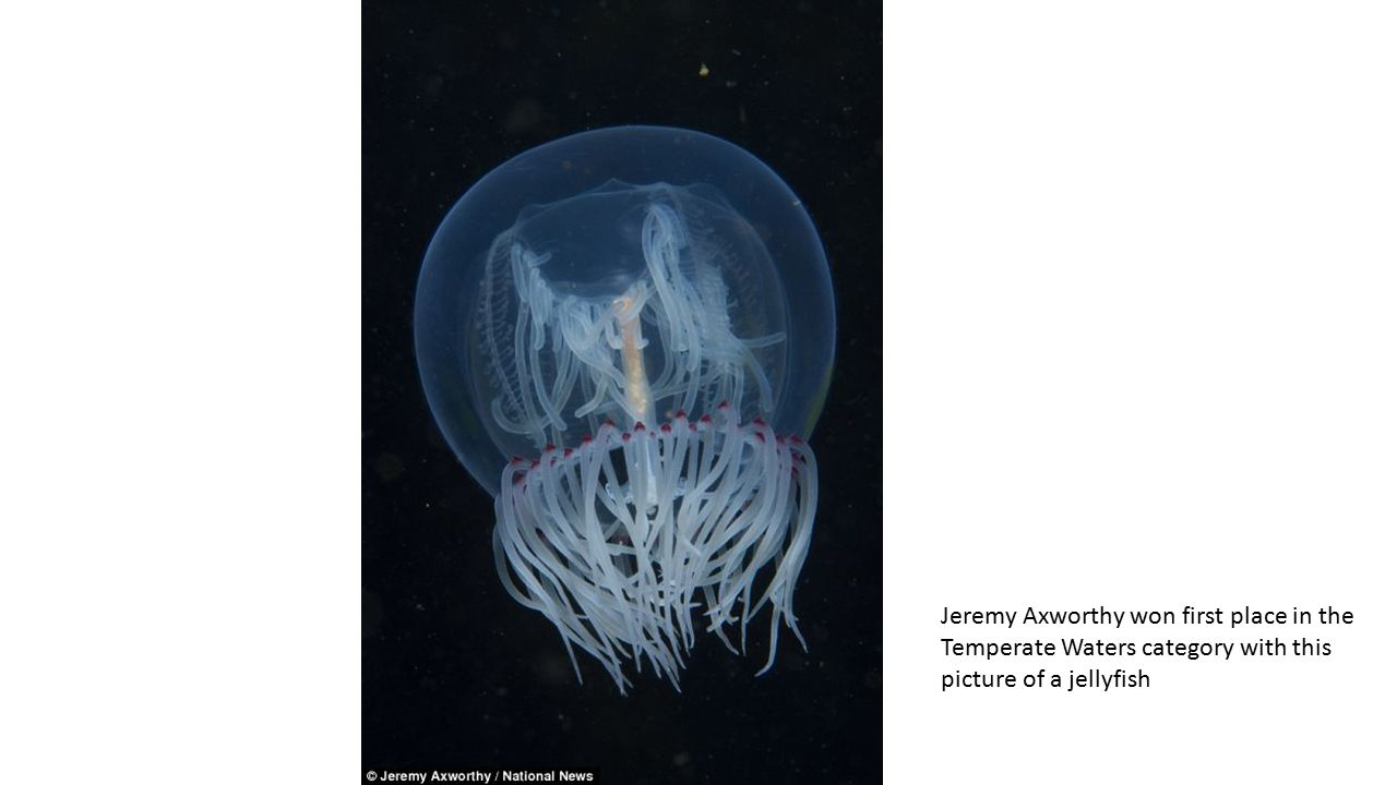 Jeremy Axworthy won first place in the Temperate Waters category with this picture of a jellyfish