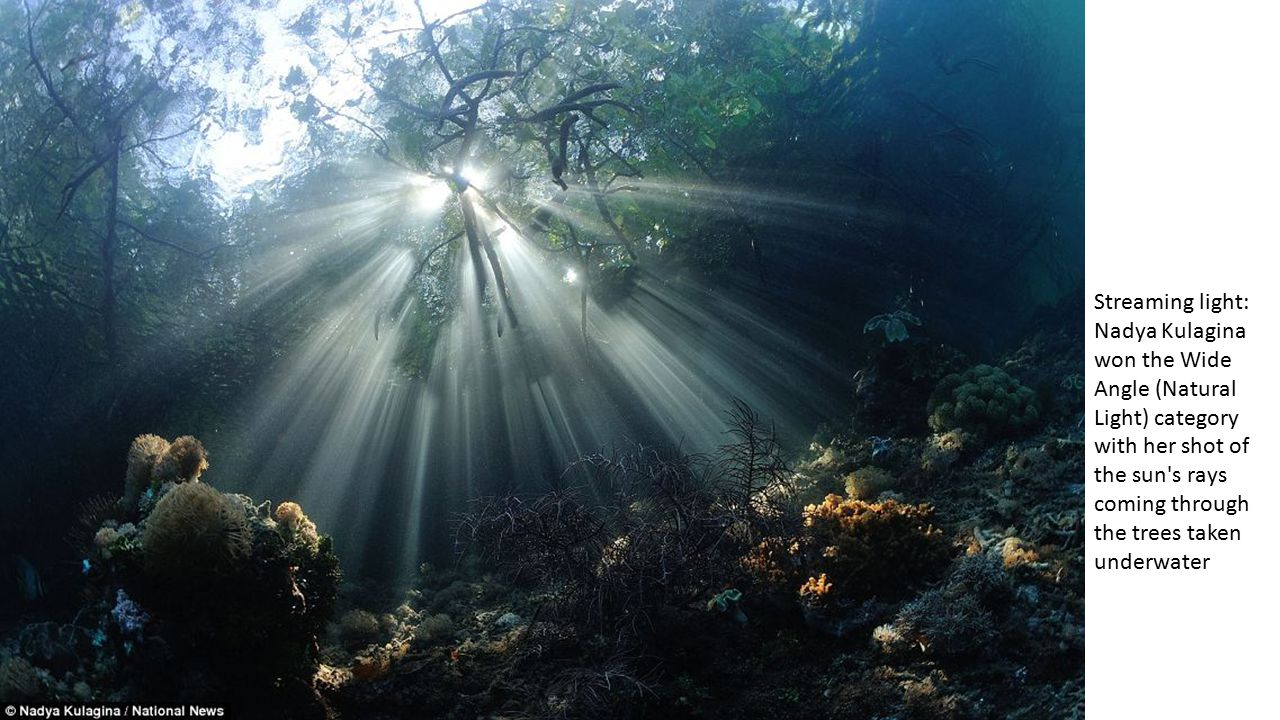 Streaming light: Nadya Kulagina won the Wide Angle (Natural Light) category with her shot of the sun s rays coming through the trees taken underwater