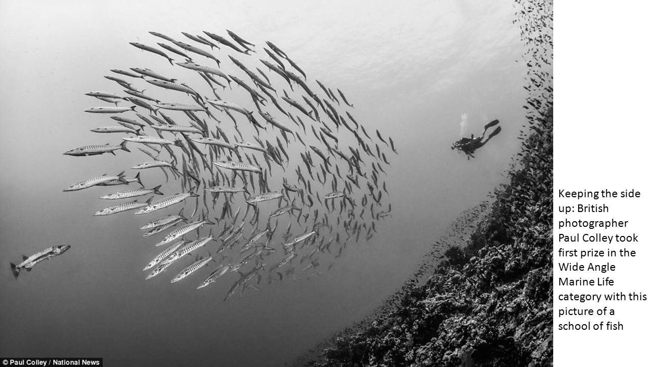Chiaroscuro: This remarkable photograph of light streaming beneath the water onto a school of fish won Ellen Cuylaerts second place in the Wide Angle / Natural Light (no strobe) category