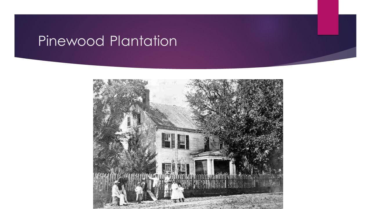 Pinewood Plantation