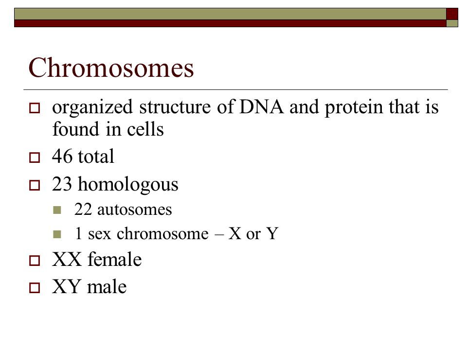 Chromosomes  organized structure of DNA and protein that is found in cells  46 total  23 homologous 22 autosomes 1 sex chromosome – X or Y  XX female  XY male