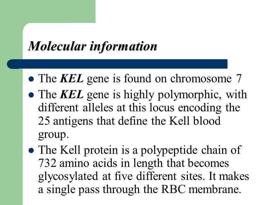 Molecular information The KEL gene is found on chromosome 7 The KEL gene is highly polymorphic, with different alleles at this locus encoding the 25 a