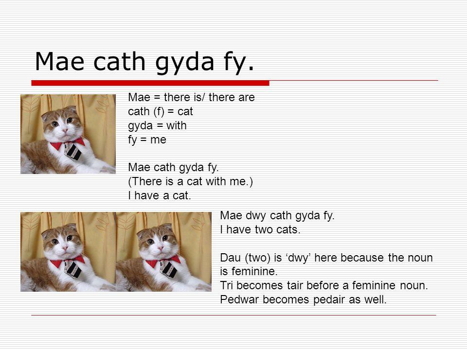 Mae cath gyda fy. Mae = there is/ there are cath (f) = cat gyda = with fy = me Mae cath gyda fy.