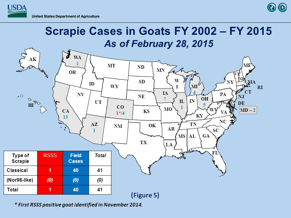WY WV WIWI WA 1 VT VA UT TX TN SD SC RI PA OR OK OH 5 NY NV NM NJ NH NE ND NC MT MS MO MN MI 6 ME MD – 2 MA LA KY KS IN IL 1 ID IA 7 HI GA FL DE CT CO 1*/4 CA 13 AZ 1 AR AK AL (Figure 5) Scrapie Cases in Goats FY 2002 – FY 2015 As of February 28, 2015 Type of Scrapie RSSSField Cases Total Classical14041 (Nor98-like)(0) Total14041 * First RSSS positive goat identified in November 2014.