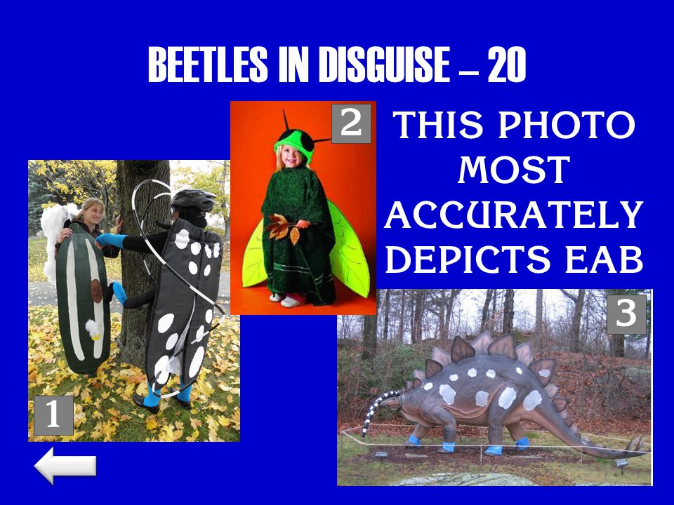 BEETLES IN DISGUISE – 20 THIS PHOTO MOST ACCURATELY DEPICTS EAB 1 2 3