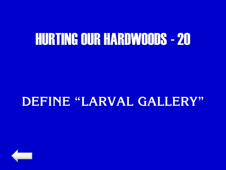 "HURTING OUR HARDWOODS - 20 DEFINE ""LARVAL GALLERY"""