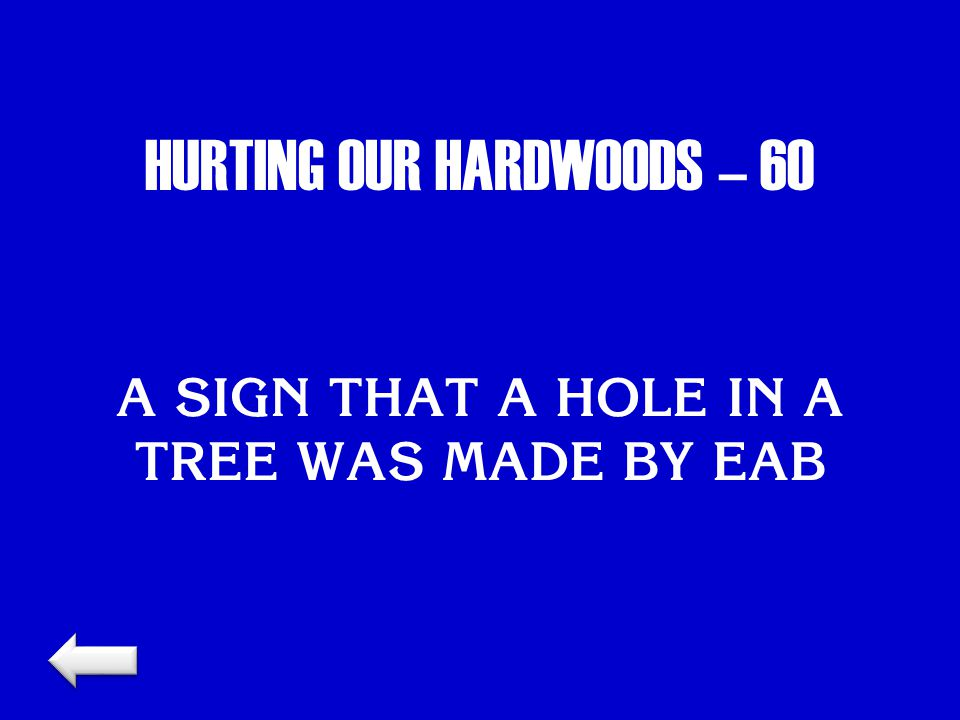 HURTING OUR HARDWOODS – 60 A SIGN THAT A HOLE IN A TREE WAS MADE BY EAB