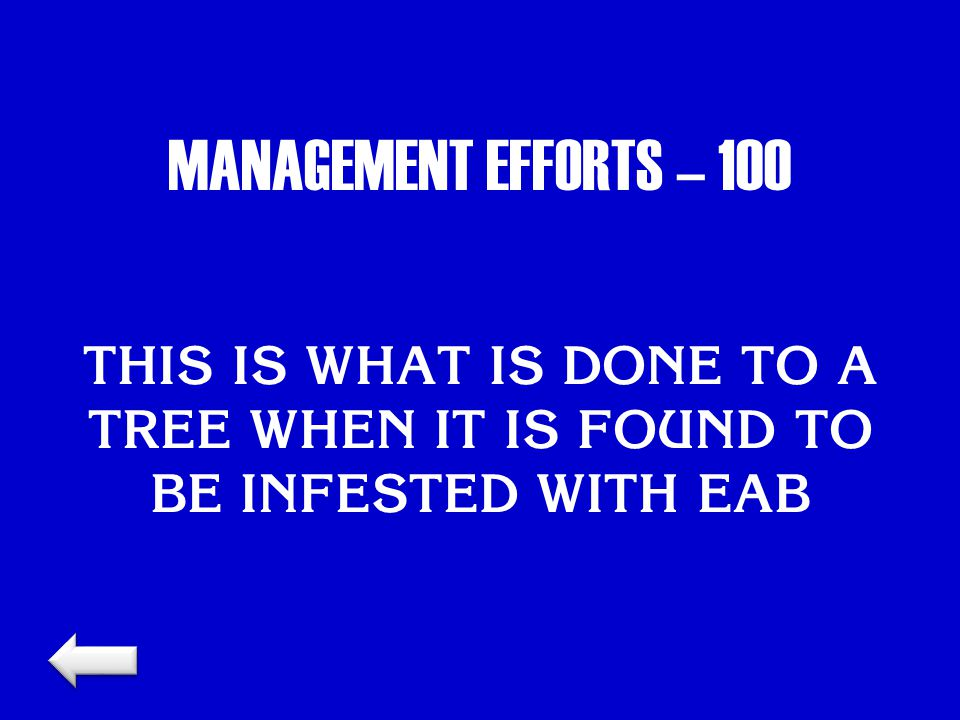 MANAGEMENT EFFORTS – 100 THIS IS WHAT IS DONE TO A TREE WHEN IT IS FOUND TO BE INFESTED WITH EAB