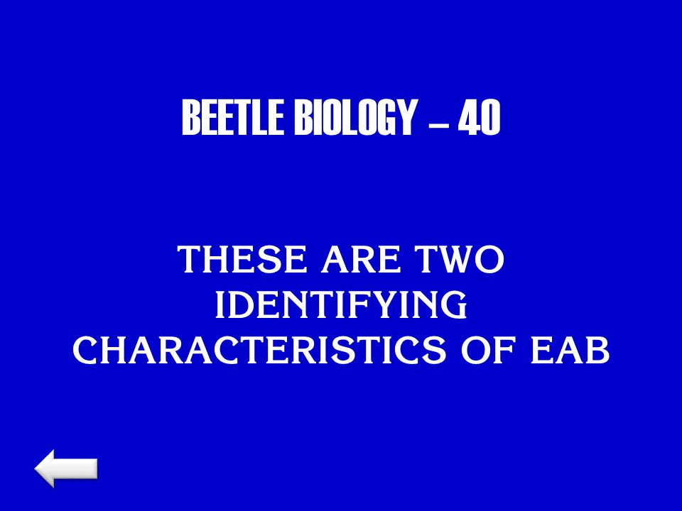 BEETLE BIOLOGY – 40 THESE ARE TWO IDENTIFYING CHARACTERISTICS OF EAB
