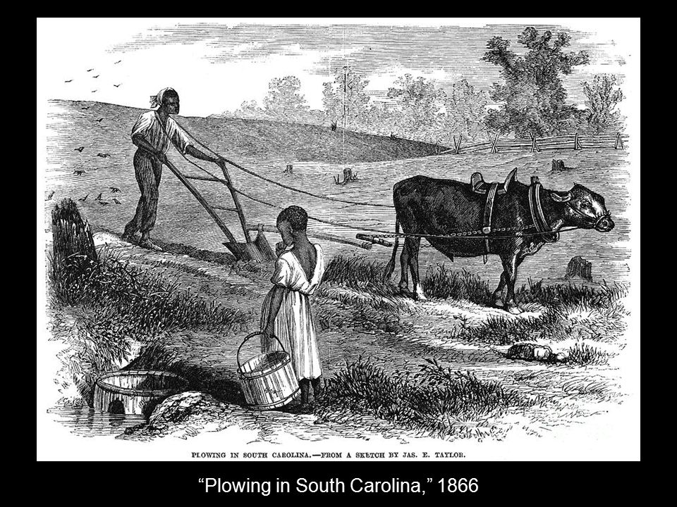 Plowing in South Carolina, 1866