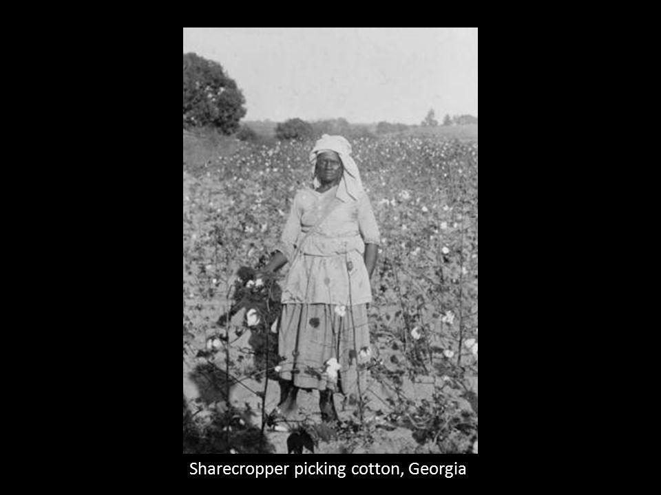 Sharecropper picking cotton, Georgia