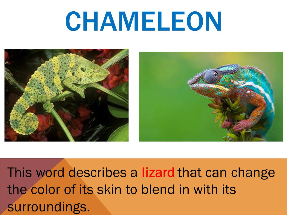 CHAMELEON This word describes a lizard that can change the color of its skin to blend in with its surroundings.
