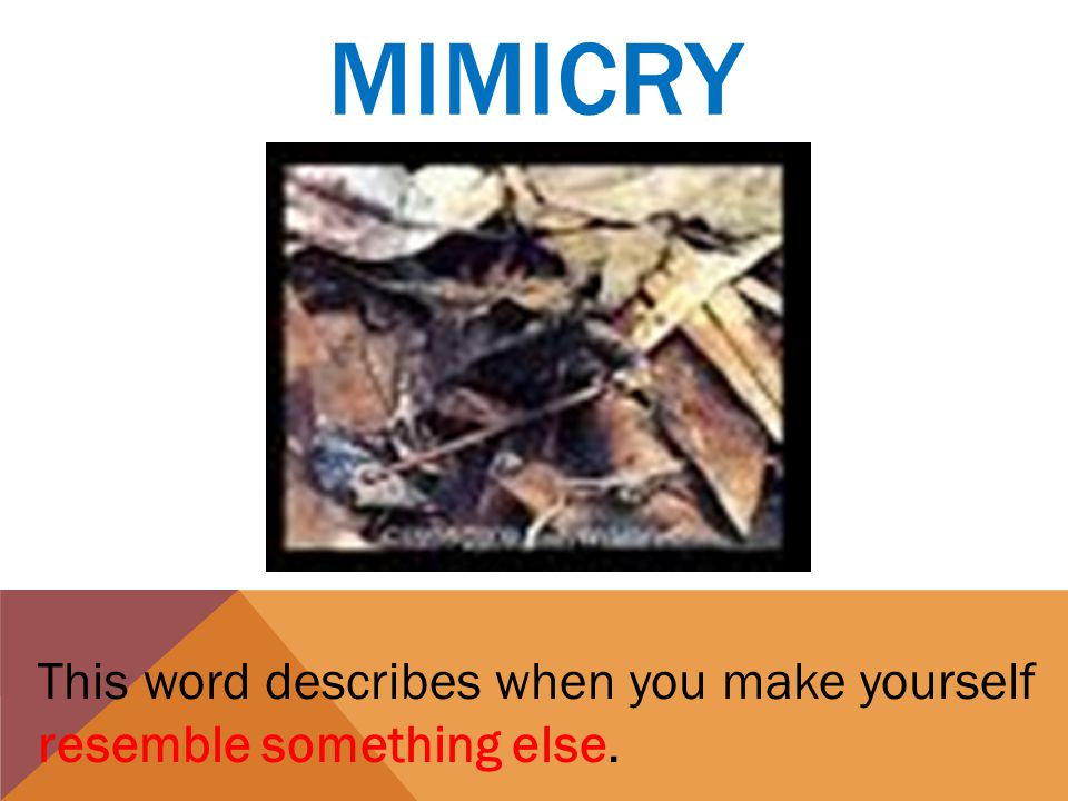 MIMICRY This word describes when you make yourself resemble something else.