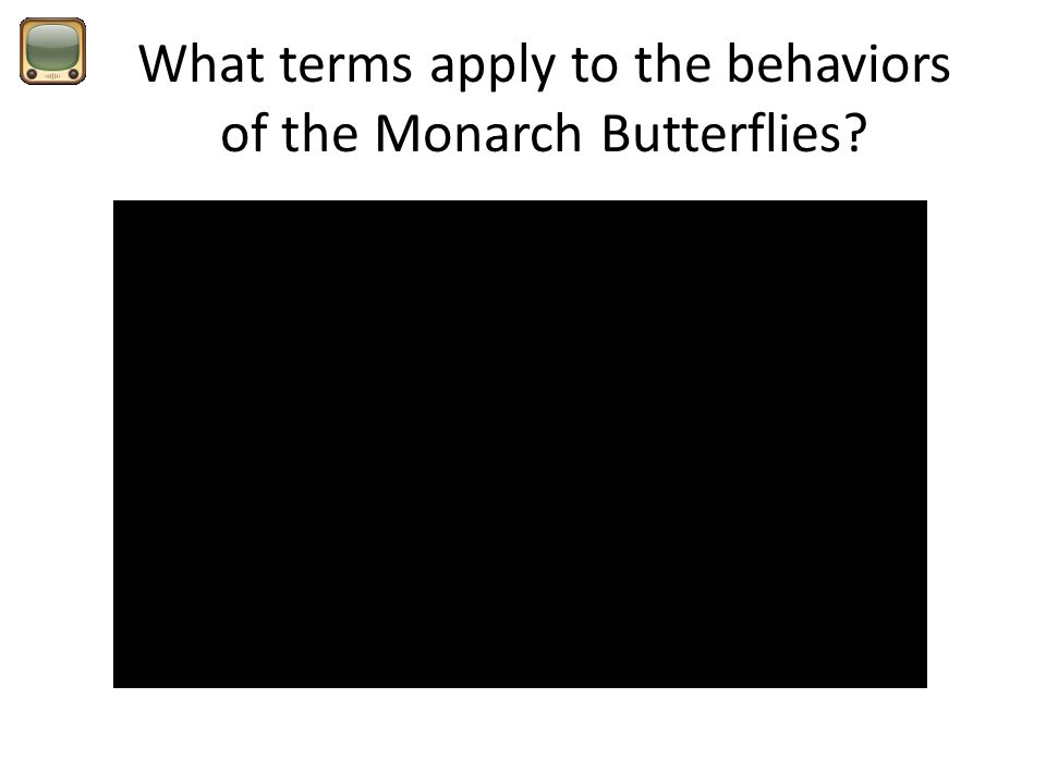 What terms apply to the behaviors of the Monarch Butterflies?