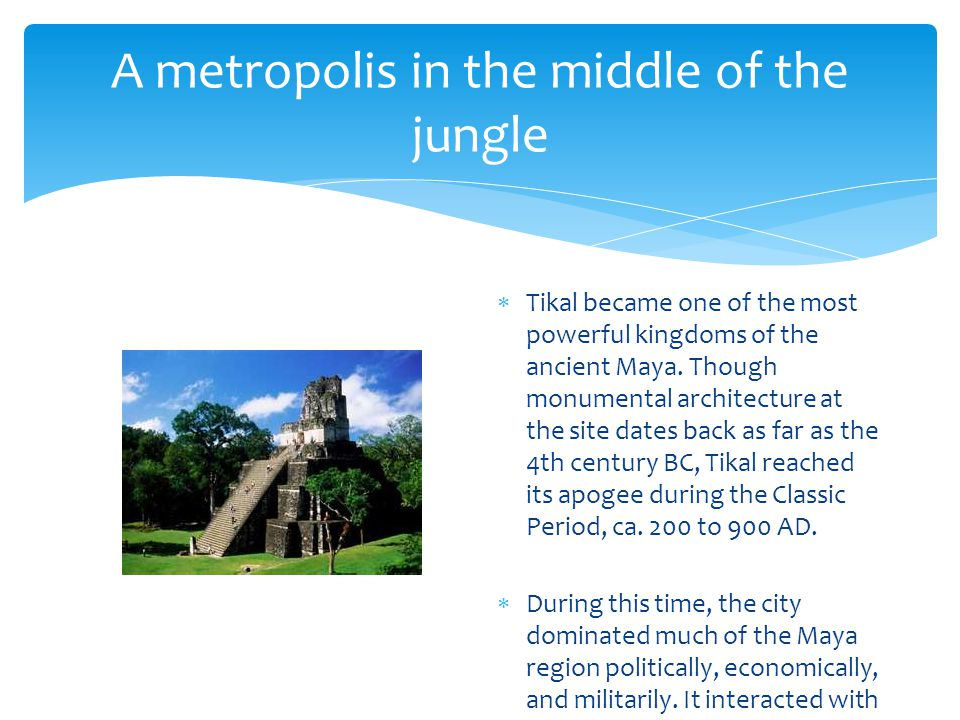 A metropolis in the middle of the jungle  Tikal became one of the most powerful kingdoms of the ancient Maya.