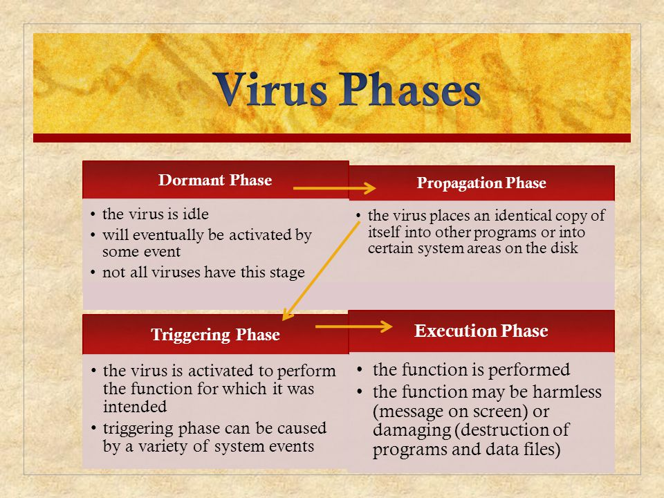 Propagation Phase the virus places an identical copy of itself into other programs or into certain system areas on the disk Execution Phase the functi