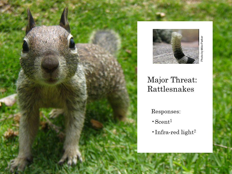 Responses: Scent 1 Infra-red light 2 Photo by Mike Parker Major Threat: Rattlesnakes