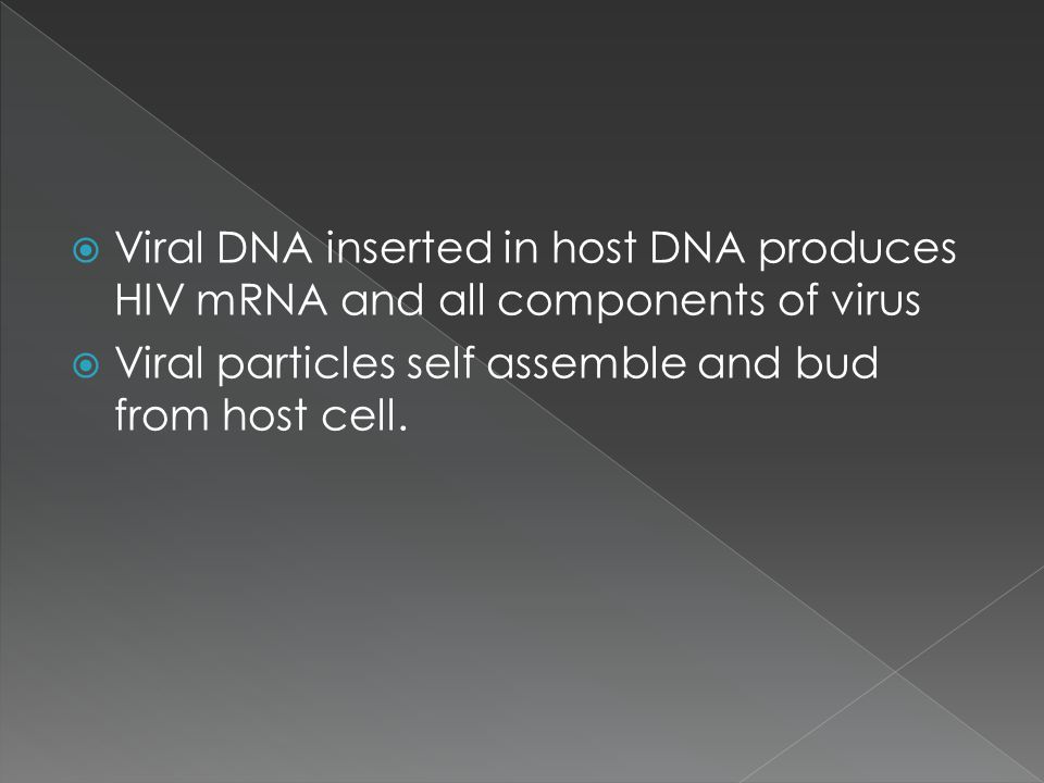  Viral DNA inserted in host DNA produces HIV mRNA and all components of virus  Viral particles self assemble and bud from host cell.