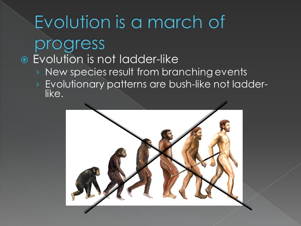  Evolution is not ladder-like › New species result from branching events › Evolutionary patterns are bush-like not ladder- like.