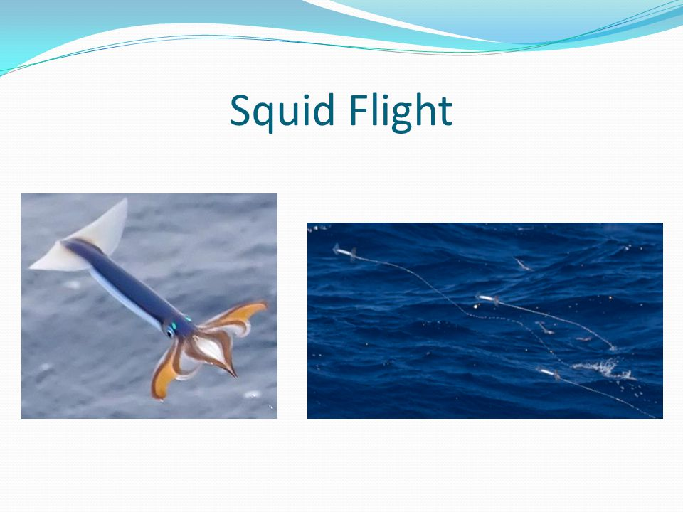 Squid Flight