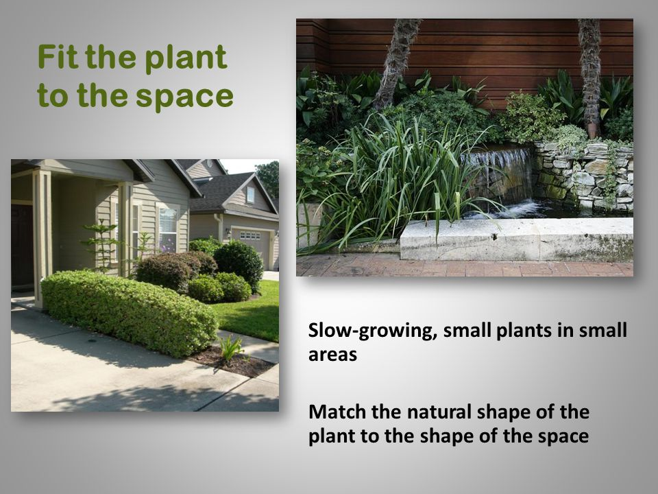 Fit the plant to the space Slow-growing, small plants in small areas Match the natural shape of the plant to the shape of the space