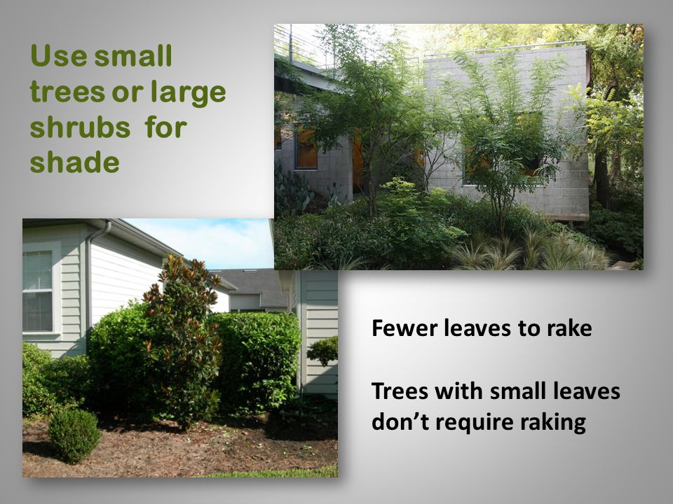 Use small trees or large shrubs for shade Fewer leaves to rake Trees with small leaves don't require raking