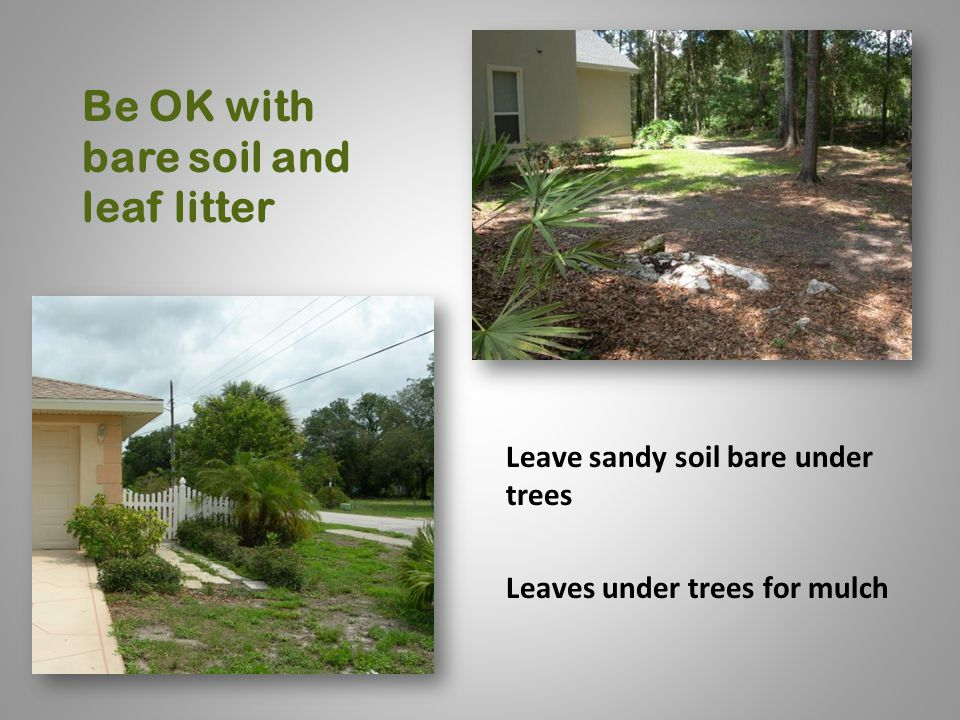 Be OK with bare soil and leaf litter Leave sandy soil bare under trees Leaves under trees for mulch