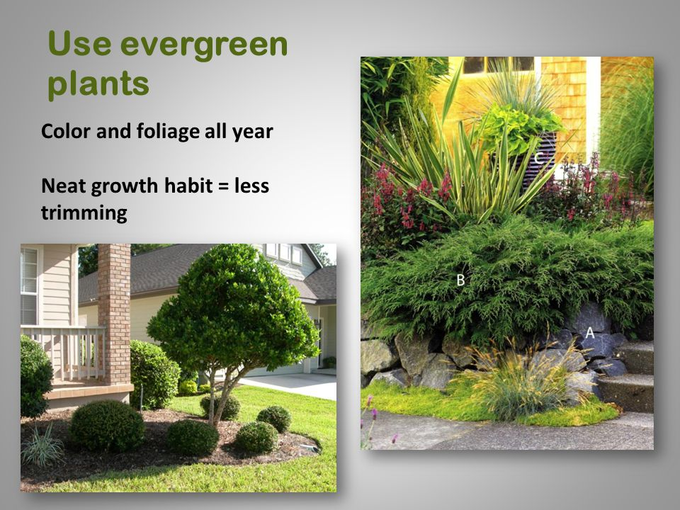 Use evergreen plants Color and foliage all year Neat growth habit = less trimming