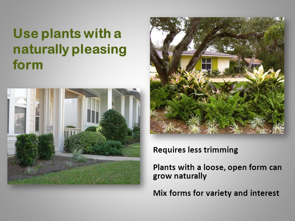 Use plants with a naturally pleasing form Requires less trimming Plants with a loose, open form can grow naturally Mix forms for variety and interest