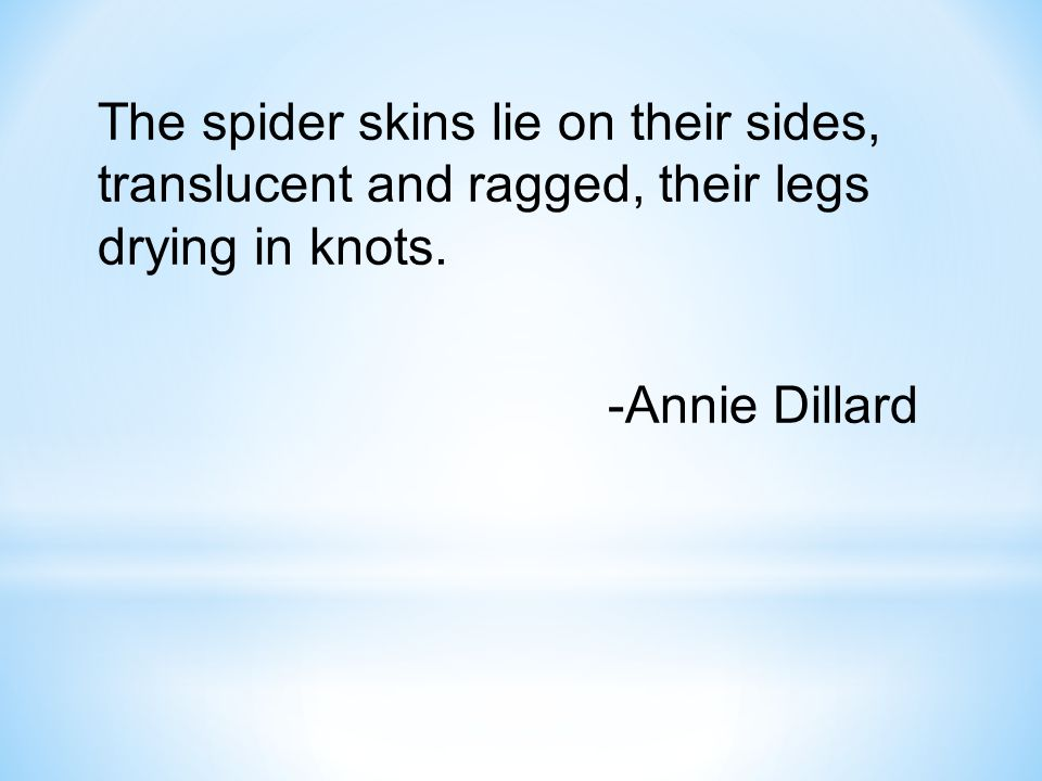 The spider skins lie on their sides, translucent and ragged, their legs drying in knots. -Annie Dillard