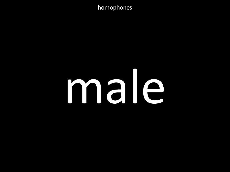 male homophones