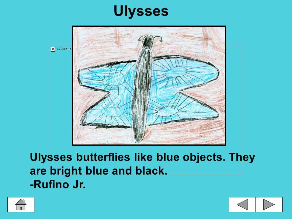 Different Kinds of Butterflies Kamehameha Violet Copper Transparent MonarchUlysses