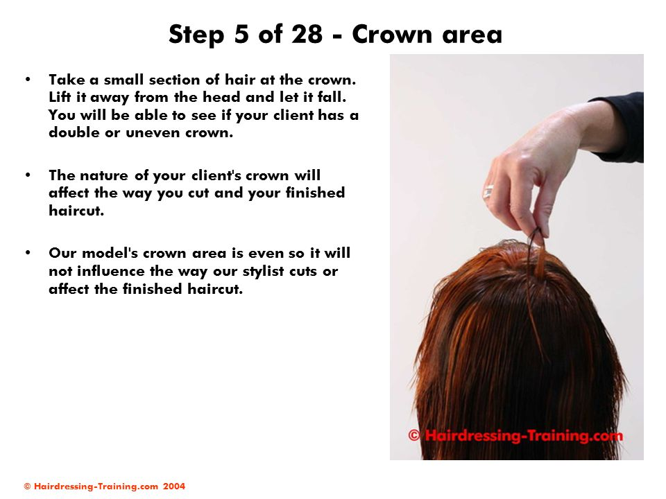 © Hairdressing-Training.com 2004 Step 16 of 28 - Working in the side areas Work backwards with your diagonal sections.