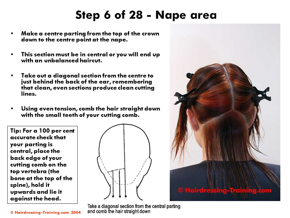 © Hairdressing-Training.com 2004 Step 7 of 28 - Graduation Your client s head should be in a slightly downward position to allow you to achieve a clean cutting line.