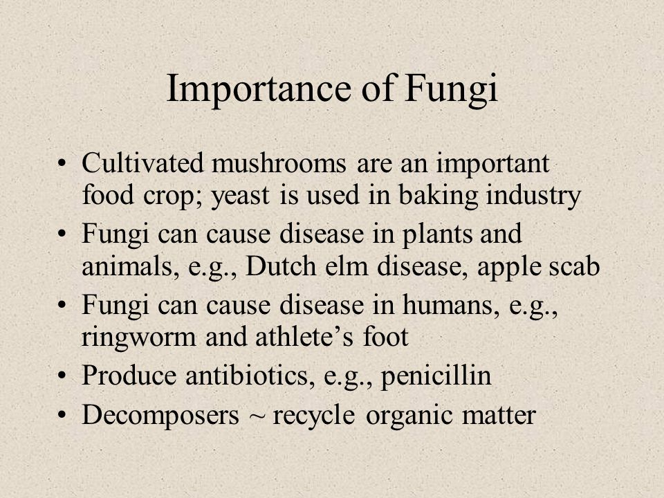 Importance of Fungi Cultivated mushrooms are an important food crop; yeast is used in baking industry Fungi can cause disease in plants and animals, e.g., Dutch elm disease, apple scab Fungi can cause disease in humans, e.g., ringworm and athlete's foot Produce antibiotics, e.g., penicillin Decomposers ~ recycle organic matter