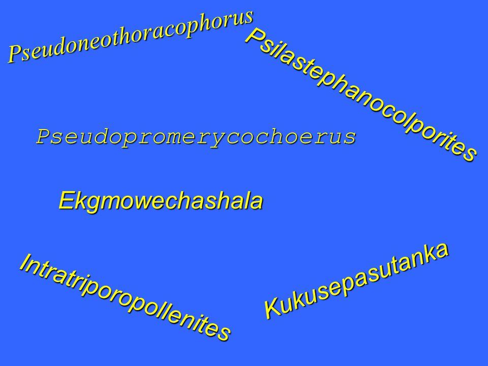 Pseudoneothoracophorus Pseudopromerycochoerus Ekgmowechashala Kukusepasutanka Psilastephanocolporites Intratriporopollenites