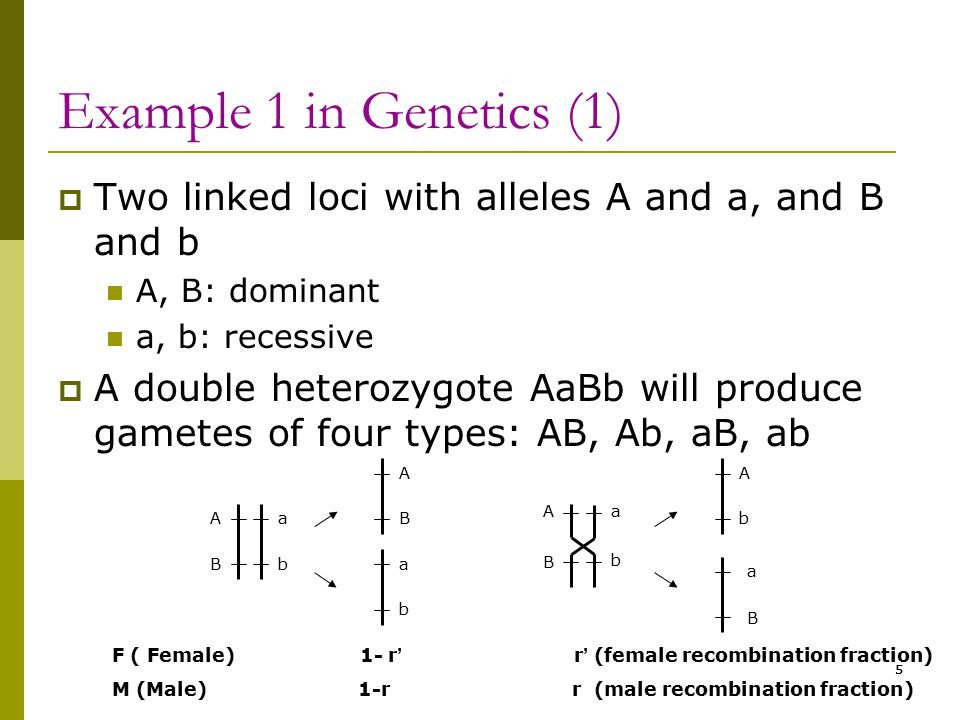 5 Example 1 in Genetics (1)  Two linked loci with alleles A and a, and B and b A, B: dominant a, b: recessive  A double heterozygote AaBb will produ