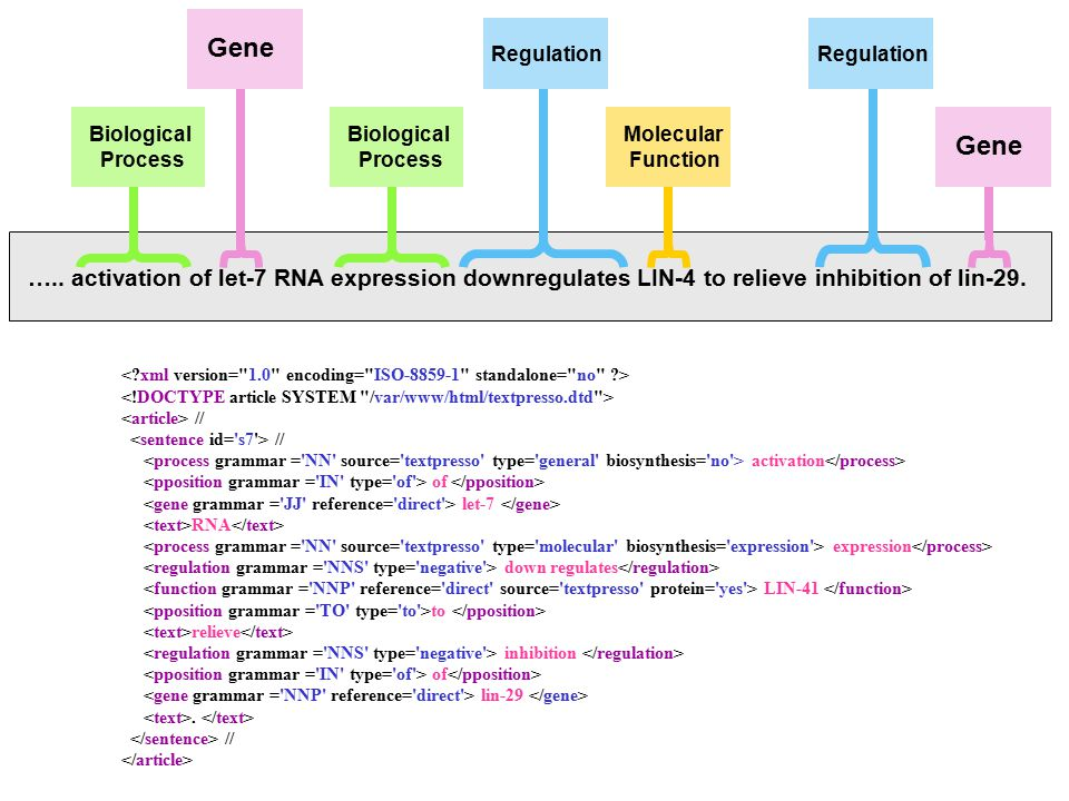 ….. activation of let-7 RNA expression downregulates LIN-4 to relieve inhibition of lin-29.