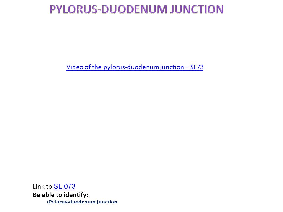 Link to SL 073 SL 073 Be able to identify: Pylorus-duodenum junction Video of the pylorus-duodenum junction – SL73